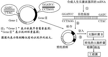 (10分)10.科学家将人的生长激素照片与基因杆女生好看的手大肠图片