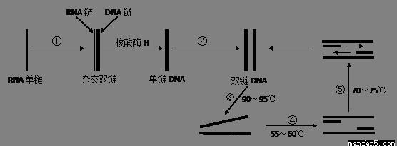 电路 电路图 电子 设计 素材 原理图 556_205