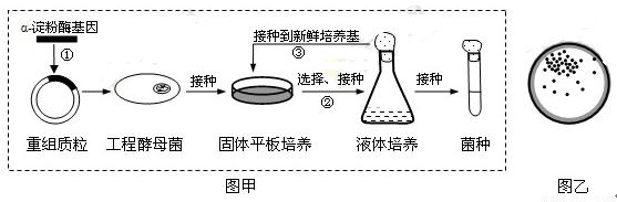 先用一种限制酶切割,通过电泳技术将单酶水解片段
