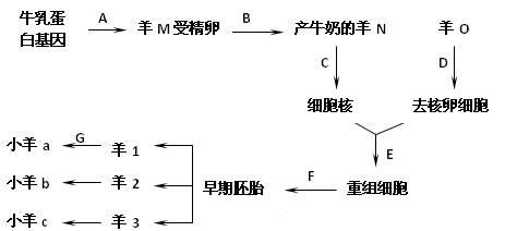 通过dna重组技术使原有基因得以改造的动物称为转基因