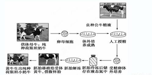 厂化生产的技术流程图