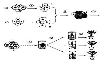 下图所示为植物组织培养的流程图
