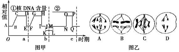 下列两图为某种动物细胞分裂过程中的坐标图和细胞图.
