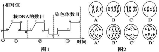 电路 电路图 电子 原理图 533_177