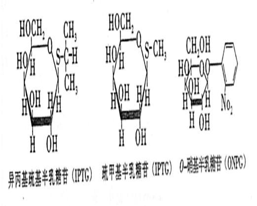大肠杆菌的乳糖操纵子含有3个结构基因:编码:—半