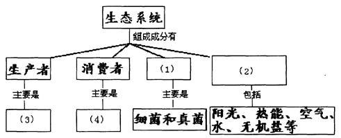 生态系统的结构包括