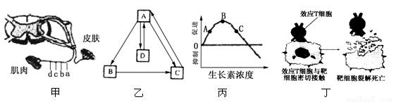 下图是胰腺组织局部结构模式图