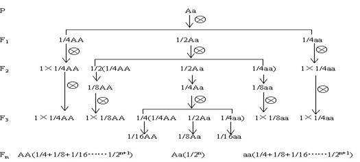 有以下的遗传图解
