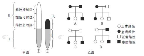"""""""下面甲图为某动物的一对性染色体简图.①和.""""习题详情"""