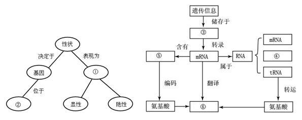 经过分析,习题下列表格内为部分氨基酸的密码子,下图为细胞内蛋白质合成的某过程图解。请分析回答问题: 氨基酸 丙氨酸 苏氨酸 精氨酸 色氨酸 密码子 GCG ACG CGG UGG GCC ACC CGC UGC GCA ACA CGA UGA GCU ACU CGU UGU (1)图中所示属于蛋白质合成过程中的____步骤,该过程的模板是[ ]____。(2)由图中信息可推知DNA模板链上对应的碱基序列为____。(3)根据图并参考上表分析可知,[1]____上携带的氨基酸是____,这个氨基酸与前面的氨