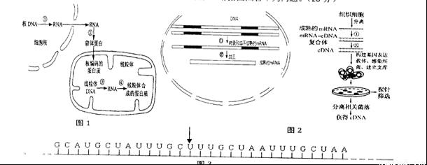 """基因的概念与表达知识点 """"根据下图回答下列问题(7分):(1)上图."""