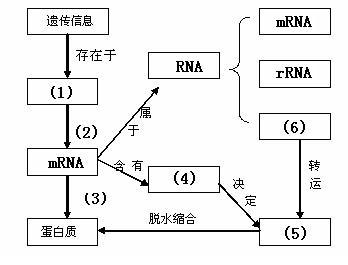 基因的概念与表达知识点