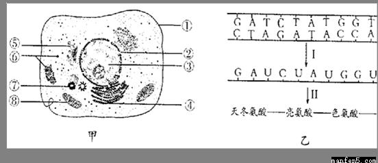 """基因的概念与表达知识点 """"下图表示的是原核细胞中遗传信息的传递过程"""