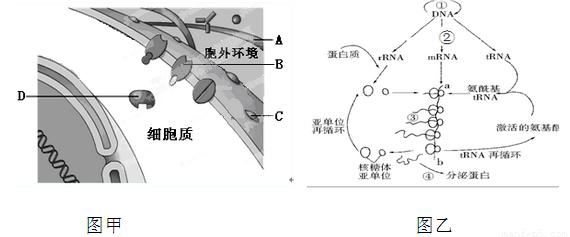 如图是基因控制蛋白质合成的两个主要步骤