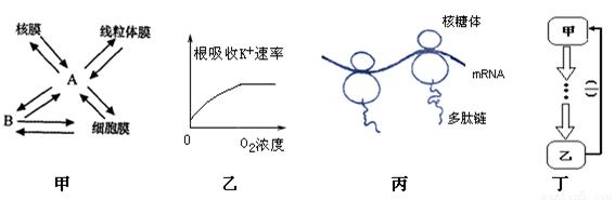 经过分析,习题某生物精原细胞的染色体上有2n个基因,DNA含量为6.4C(单位),则该生物肝细胞的染色体上含有基因数和DNA含量为____主要考察你对基因的概念与表达 等考点的理解。 因为篇幅有限,只列出部分考点,详细请访问乐乐课堂。