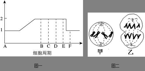 高等植物细胞有丝分裂过程与动物细胞不同,是因为高等