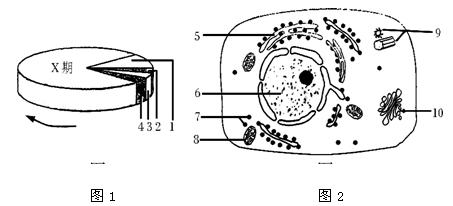 图1为细胞周期的模式图