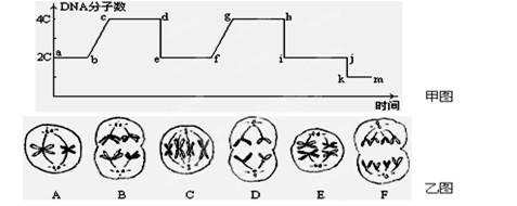 下图为某生物细胞有丝分裂过程中,dna的变化曲线,据图