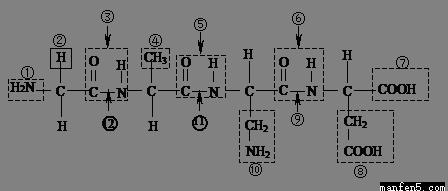 根据下面化合物的结构,分析回答.