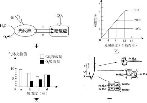 下图表示一个水稻叶肉细胞内发生的部分代谢简图.图中