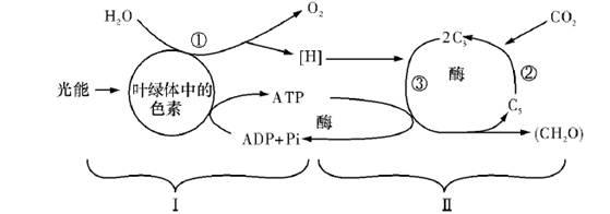经过分析,习题下面为植物的某个叶肉细胞及其中的两种膜结构图,以及在膜上发生的生化反应。请据图分析回答下列问题:(1)图A和图B所示的生物膜分别表示图C中____和____(细胞器)的膜。(填写序号)(2)图B中的本质是____。(3)图A中产生的[H]的作用是____。图B中[H]的产生过程是____。(4)如果图A中的O2被图B利用,至少要穿过____层生物膜。(5)两种膜结构所在的细胞器为适应各自的功能,都有增大膜结构的方式,它们分别是________。.