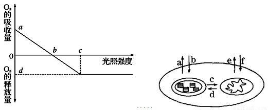 (12分)图为植物光合作用强度随光照强度变化的坐标图,图中a~f代表o