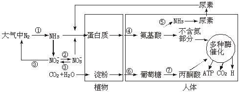 下图为生物界氮循环的示意图