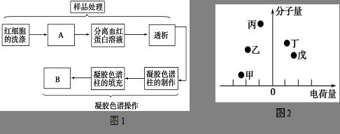 请根据血红蛋白的提取和分离流程图(如图1))回答问题