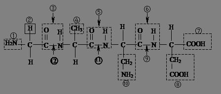 """""""根据下列化合物的结构分析回答:(1)该化.""""习题详情"""