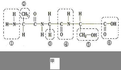 图甲是某化合物的结构简图,图乙是物质出入细胞的示意图,请据图回答
