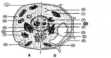 (共16分)如图所示为动物细胞和植物细胞的亚显微结构示意图