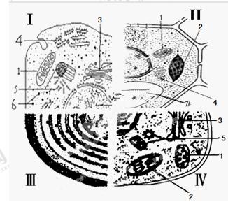 """细胞的结构与功能知识点 """"原生动物中的变形虫可通过伸出伪足来不断运"""