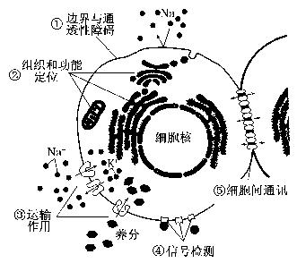 """""""习题详情  下图表示细胞膜功能结构模式图,据图分析下列说法 不正确"""
