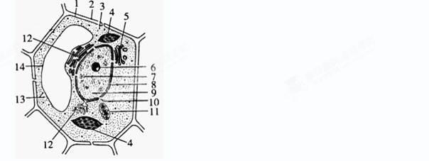 右图是高等动物细胞的结构模式图.据图分析下列叙述正确的是