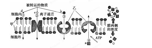 下列生物与麻风杆菌结构最相似的是