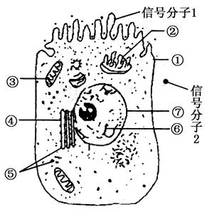 图甲是某水生高等植物细胞亚显微结构模式图,图乙为其
