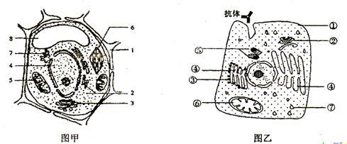 图乙某动物分泌细胞亚显微结构模式图,请据图回答问题