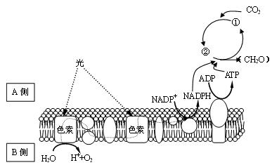 细胞的结构与功能知识点