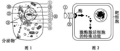 图1为高等动物细胞亚显微结构模式图