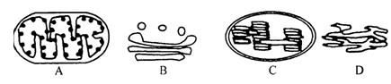 下图表示动物,植物细胞的亚显微结构模式图.请据图回答问题图片