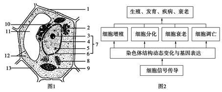 """细胞的结构与功能知识点 """"细菌细胞和植物细胞的根本区别是 ."""