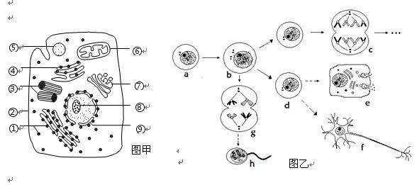 """""""习题详情  下图甲是某高等动物细胞亚显微结构示意图,图乙表示其体内"""