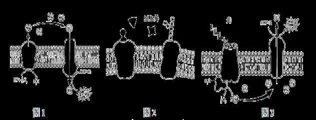 经过分析,习题(10分)下图为某同学画的洋葱根尖分生区细胞模式图,请根据此图回答下列问题。  (1)指出图中有几处处错误?___。(以下按改正后的正确图回答,括号中写标号,横线上写名称)(2)图中 [ 1]细胞壁的主要成分是_________;在有丝分裂的末期,与[ 1]细胞壁形成有关的是[ ] ______。(3)图中 [10]细胞核是______储存和复制的主要场所。 (4)在观察根尖分生组织细胞的有丝分裂实验中,制作根尖有丝分裂装片的步骤依次是:解离______染色制片。.