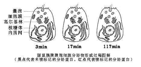 将某植物细胞各部分结构用差速离心法分离后,取其中三种细胞器测定