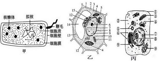 (2)太阳能通过图中乙细胞结构〔填名称〕    中进行的光合作用后