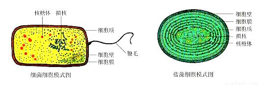 经过分析,习题(9分)图甲为高等植物细胞的亚显微结构模式图,图乙某动物分泌细胞亚显微结构模式图,请据图回答问题:(1)图甲细胞中能发生碱基互补配对的细胞器是____(填数字)。若该细胞为根尖分生区细胞,则图中不应有的结构是____。(2)图甲细胞中,与渗透吸水能力直接有关的结构是[ ] ____。(3)图甲细胞中,细胞色素C是动植物细胞普遍存在的一种蛋白质,在生成ATP的过程中起着重要的作用。细胞色素C发挥生理作用的场所有____(填图中标号)。(4)图甲细胞与图乙细胞相比,此细胞特有的结构有____(填