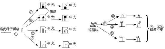 下列对右图植物细胞亚显微结构模式图正确的描述是