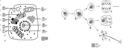 经过分析,习题下图甲是某高等动物细胞亚显微结构示意图,图乙表示其体内细胞的某些生命活动。请据图回答以下问题:(1)图甲中结构____(填序号)在图乙的b至c过程中会周期性消失和重建。结构的主要成分是____和____,其结构特性是____。(2)该细胞结构与小麦根毛区细胞相比,主要区别是该细胞有____,而没有____和液泡。(3)据图乙中,e和f都来源于d,但形态和功能却有很大的差异,其根本原因是________。.