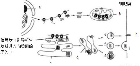 右图中的a,b是高等动植物细胞在电子显微镜下观察到的