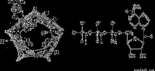 经过分析,习题(16分)下面图1是细胞亚显微结构模式图,图2是ATP的分子结构式。请据图回答:(1)图1中可能含有色素的细胞器是[ ]____  和[ ]____  ,核糖体是____场所,高等植物细胞之间的信息交流可以通过[ ]____  进行(在[ ]内填序号)。(2)图2中,方框部分称为____,它结合上一个磷酸基团就成为____的基本组成单位,ATP分子结构中的能量主要贮存在____键(写出标号和名称)中。(3)当细胞产生的ATP用于各项生命活动时,发生的主要化学反应的反应式是____。
